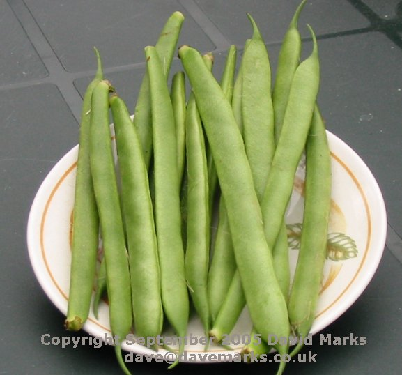How To Freeze Vegetables Runner Beans Tomato And More